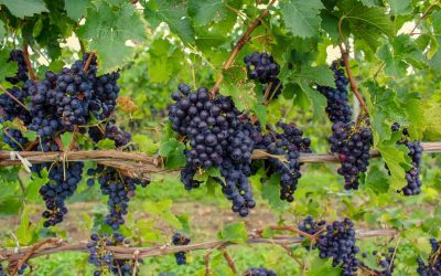 Seneca Lake Wine Tours